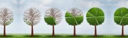 ארז לוי - פיתוח עסקים לצמיחה - תמחור על בסיס הצלחה