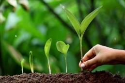 יצירת מנוע צמיחה עסקי