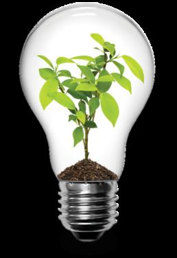 ארז לוי - פיתוח עסקי לצמיחה - עובדים אחרת